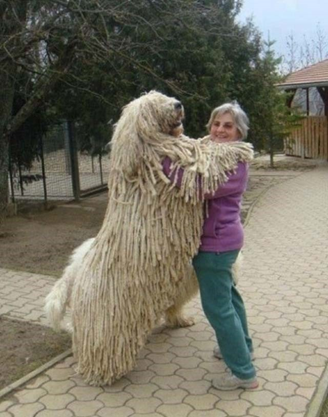 big-size-dogs06