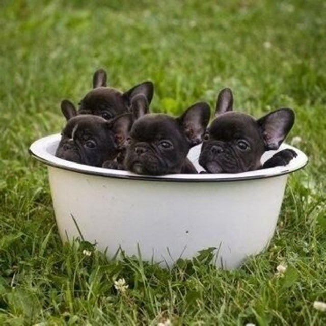 most-adorable-puppies01