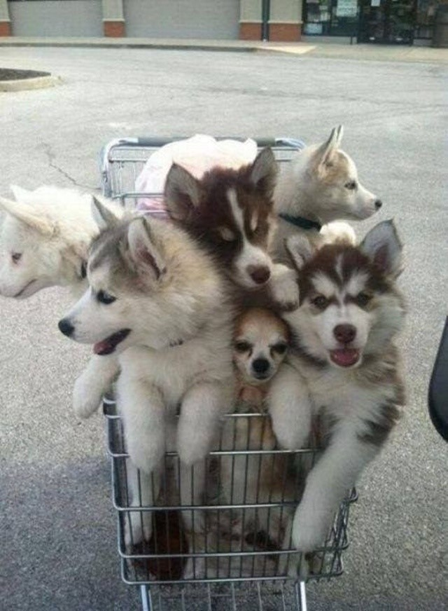most-adorable-puppies05