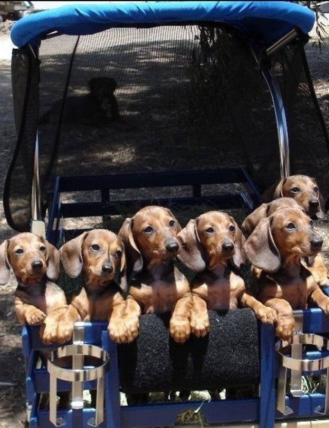 most-adorable-puppies06