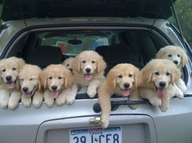 most-adorable-puppies08