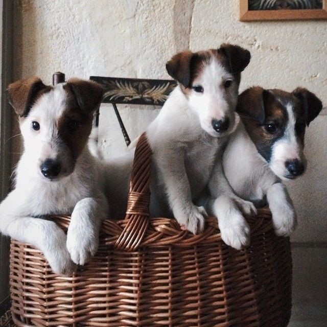 most-adorable-puppies11
