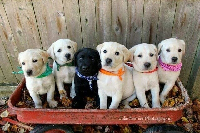most-adorable-puppies12