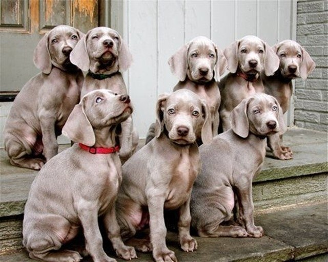 most-adorable-puppies14