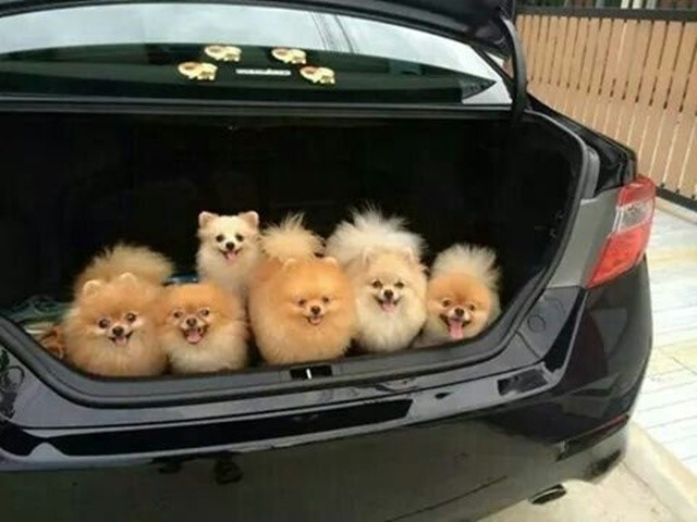 most-adorable-puppies15