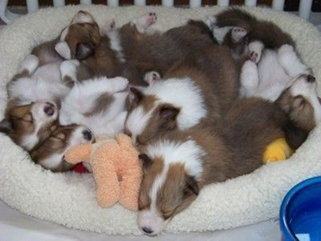 most-adorable-puppies17
