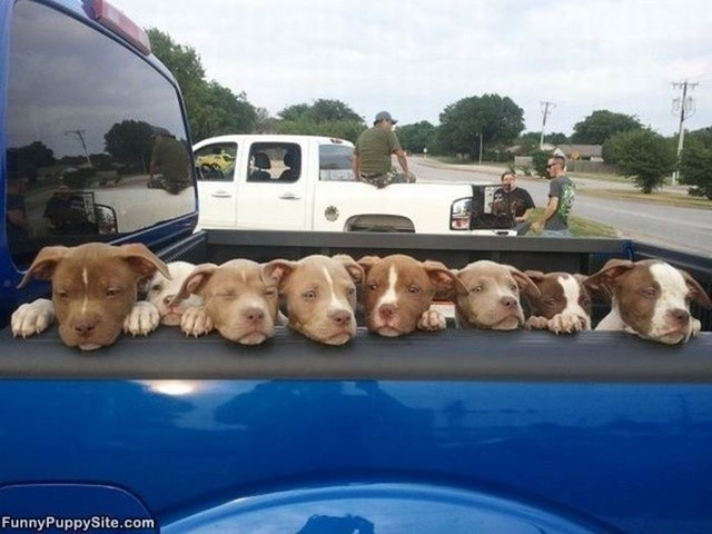 most-adorable-puppies19